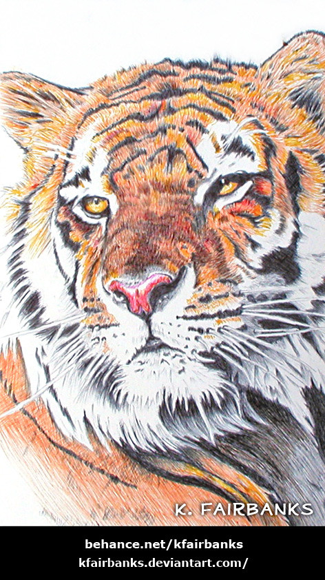 Tiger drawing (Ballpoint pen) by K. Fairbanks