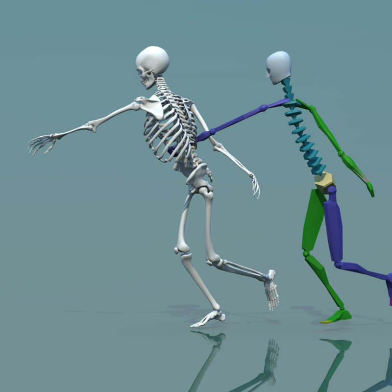 stephan plotnicov 3d model human skeleton combine with biped
