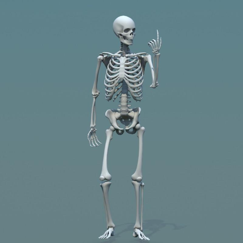 Artstation 3d Model Human Skeleton Combine With Biped Stephan