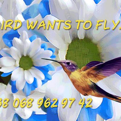 Spase maker spase maker bird