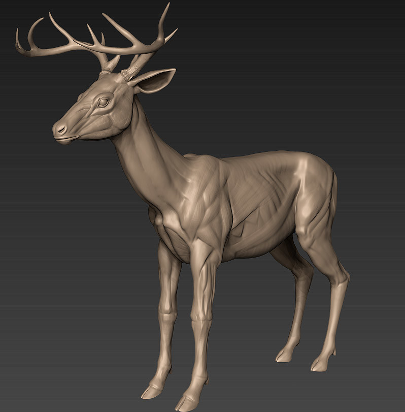 Dylan brady deer