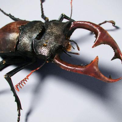 Tamas gyerman bug close v001