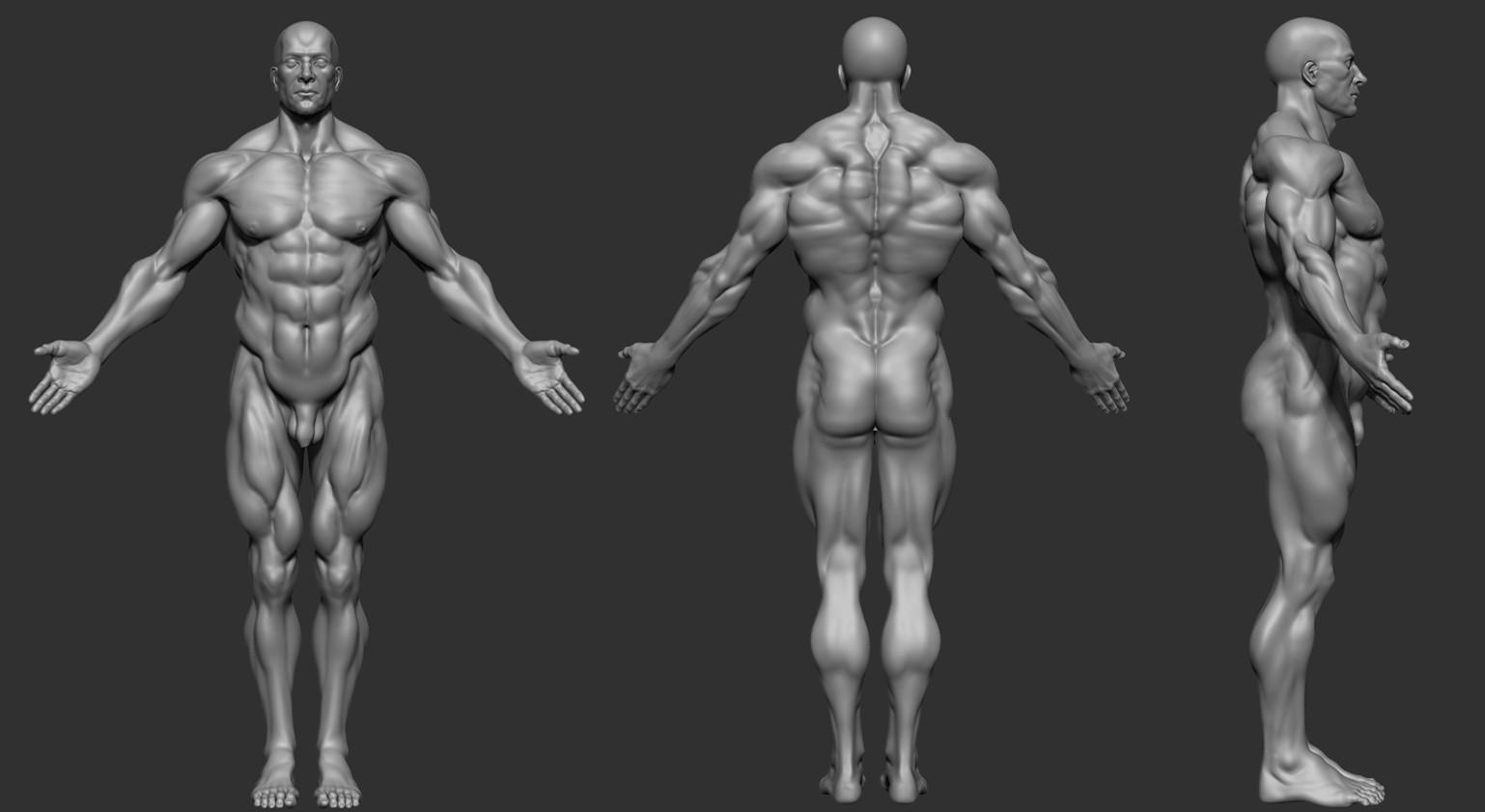 Artstation Human Anatomy Studies Oscar Loris