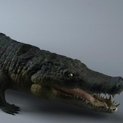 Pablo m bravo cocodrilo 27