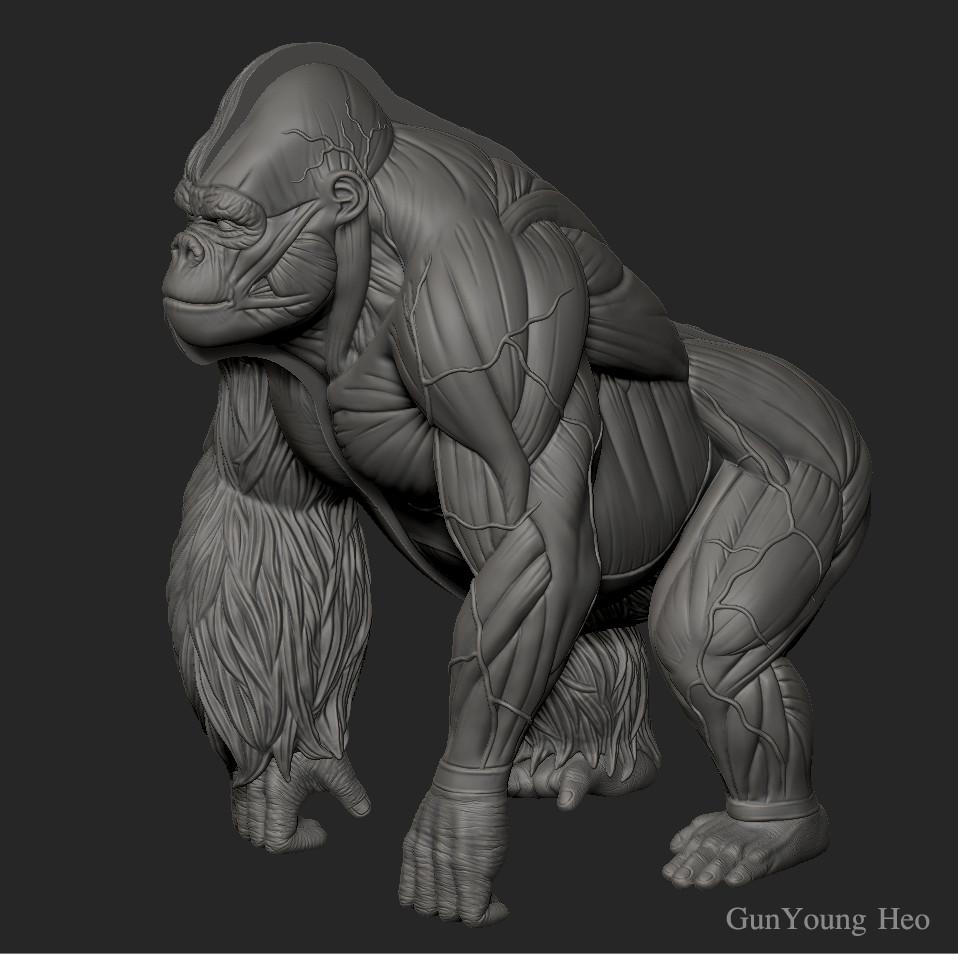 Kunyoung Heo Gorilla Anatomy 3d Print Object