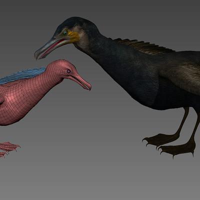 Timothy klanderud klanderud great cormorant render