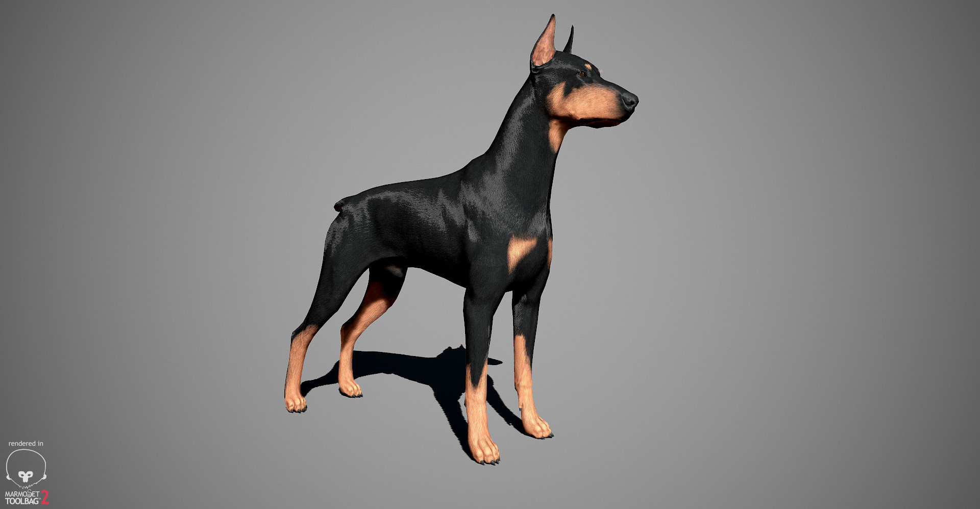 Alex lashko doberman by alexlashko marmoset 12