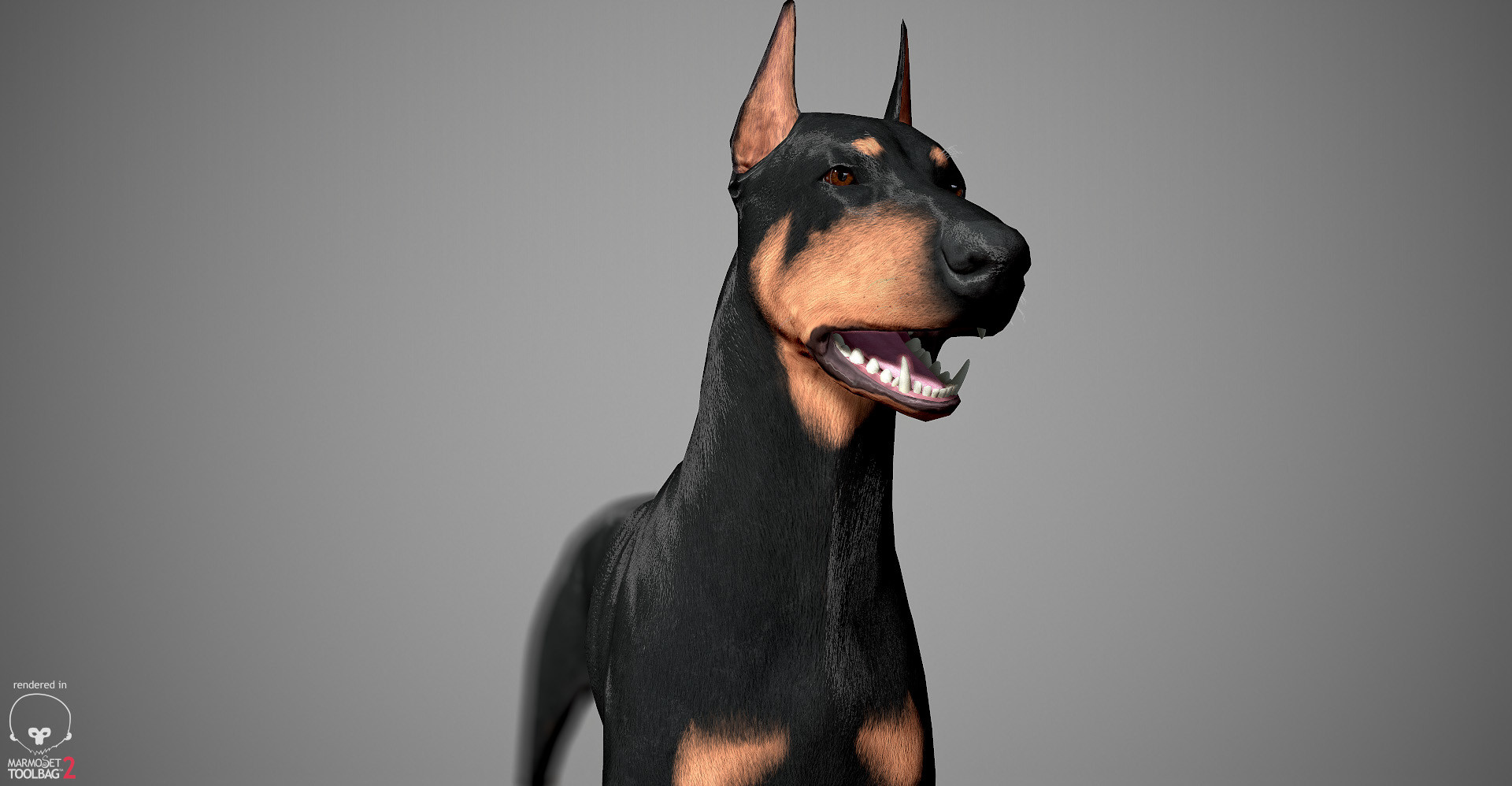 Alex lashko doberman by alexlashko marmoset 23