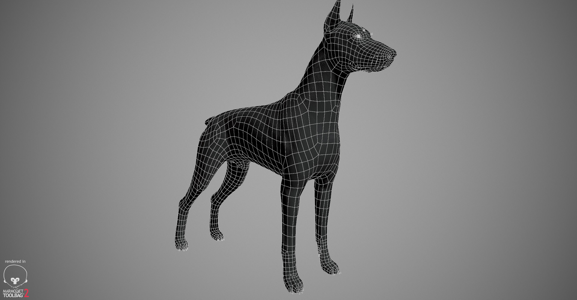 Alex lashko doberman by alexlashko wireframe 01