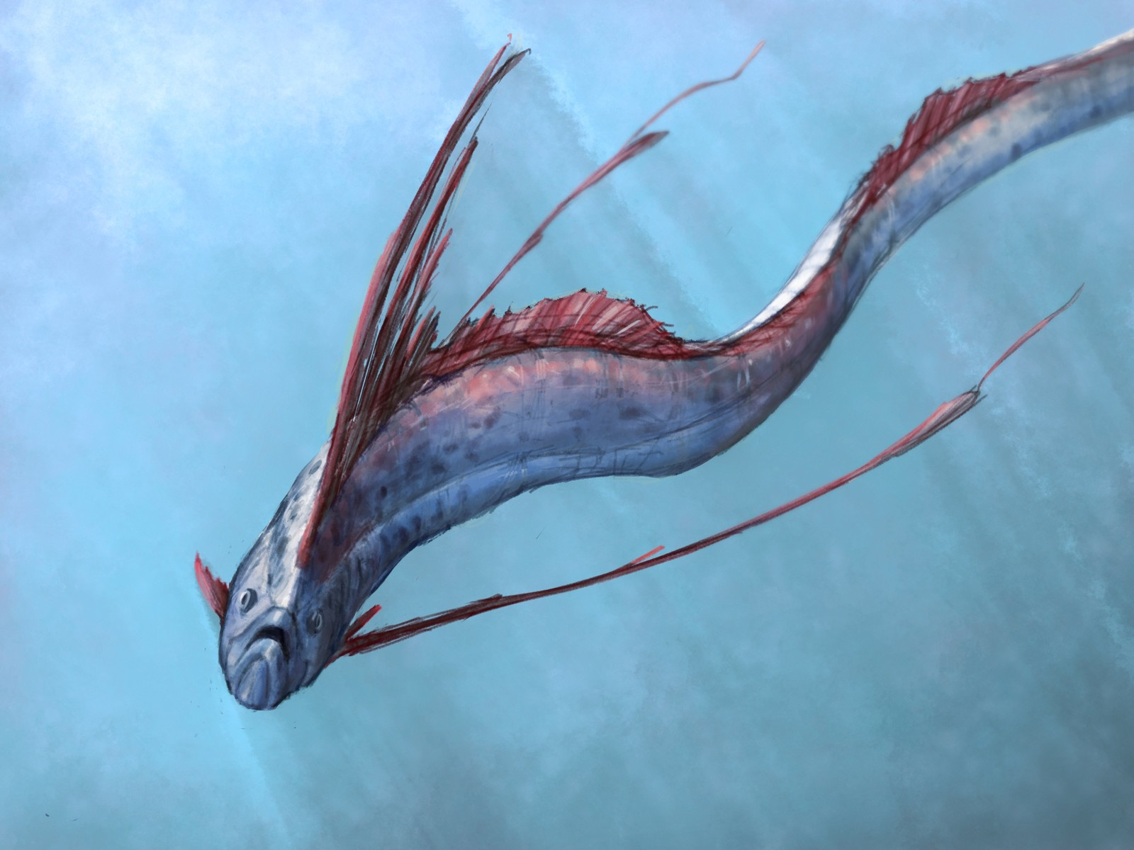 The Oarfish