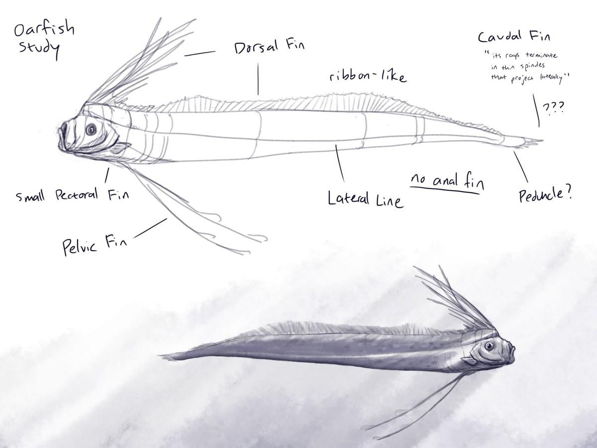Initial studies to identify its fishy anatomy