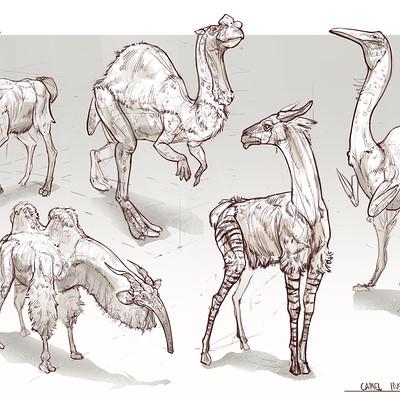 Marcin basta camel inspired 2