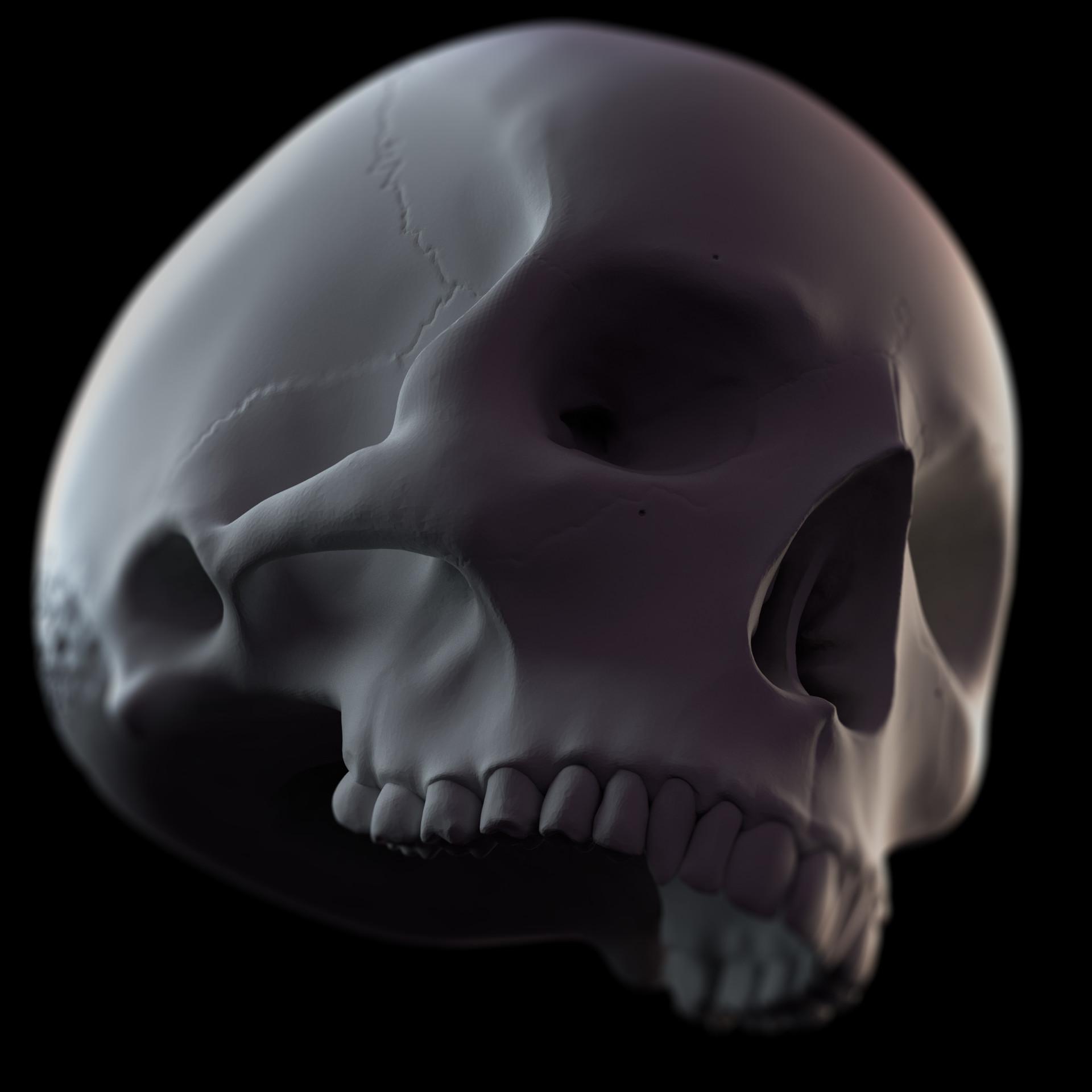 Artstation Skull Anatomy Study Javis Jones