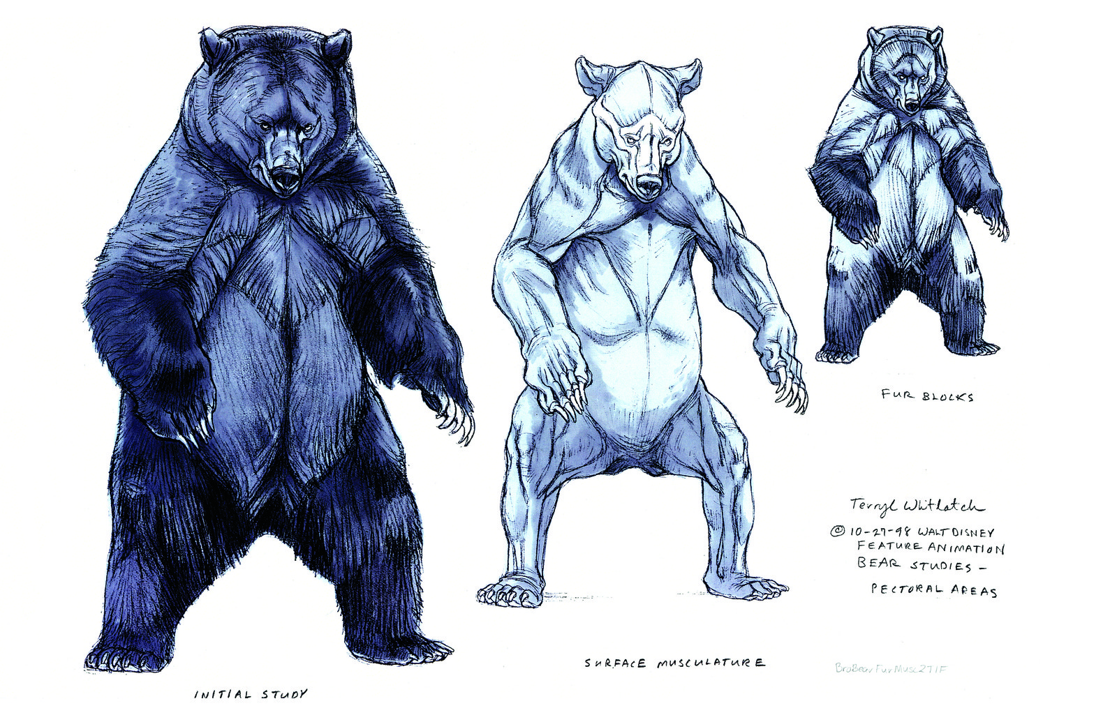 Grizzly Anatomical analysis