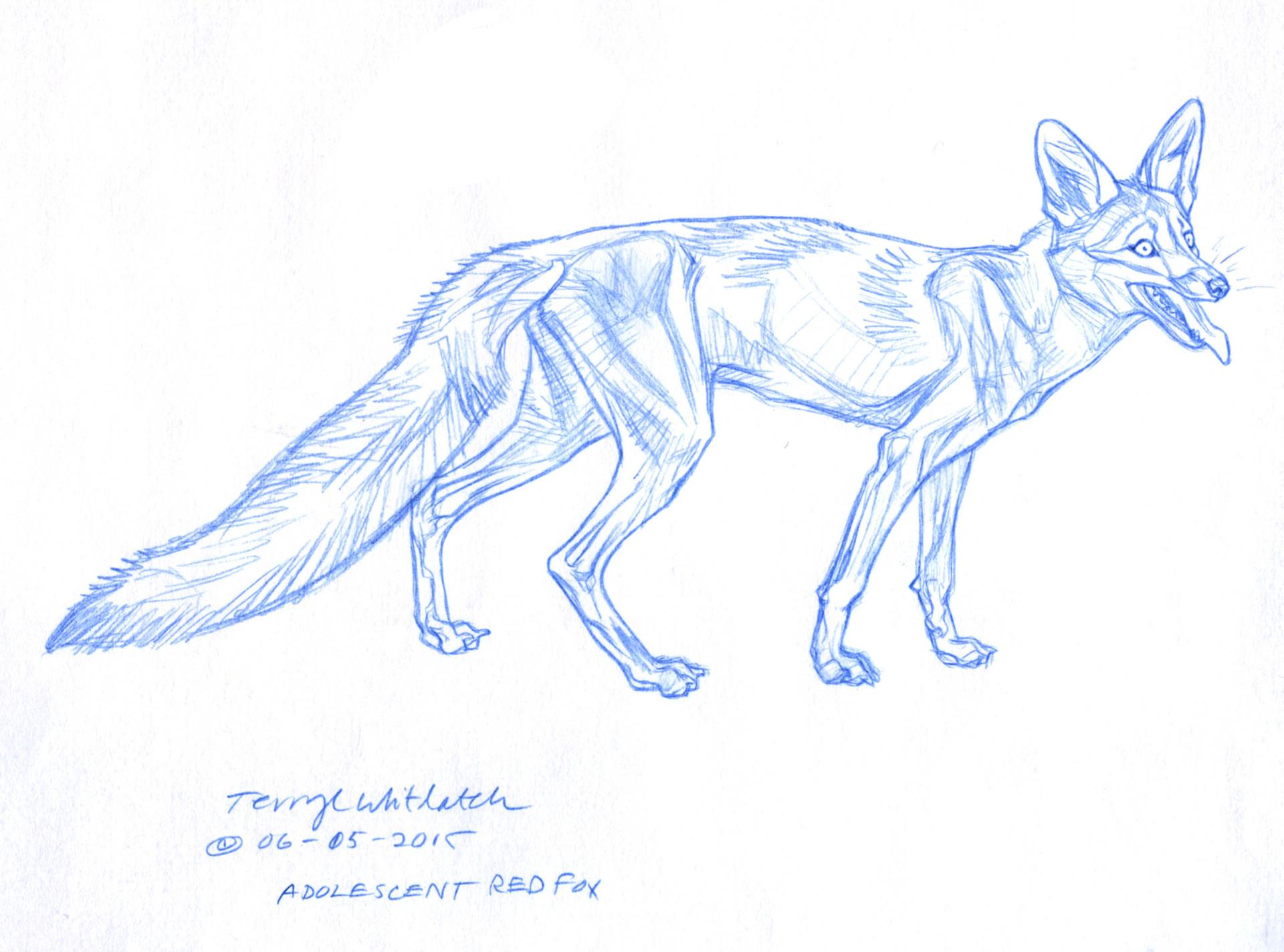 ArtStation - Animal Anatomy and Anatomy Sketchbook Studies, Terryl ...