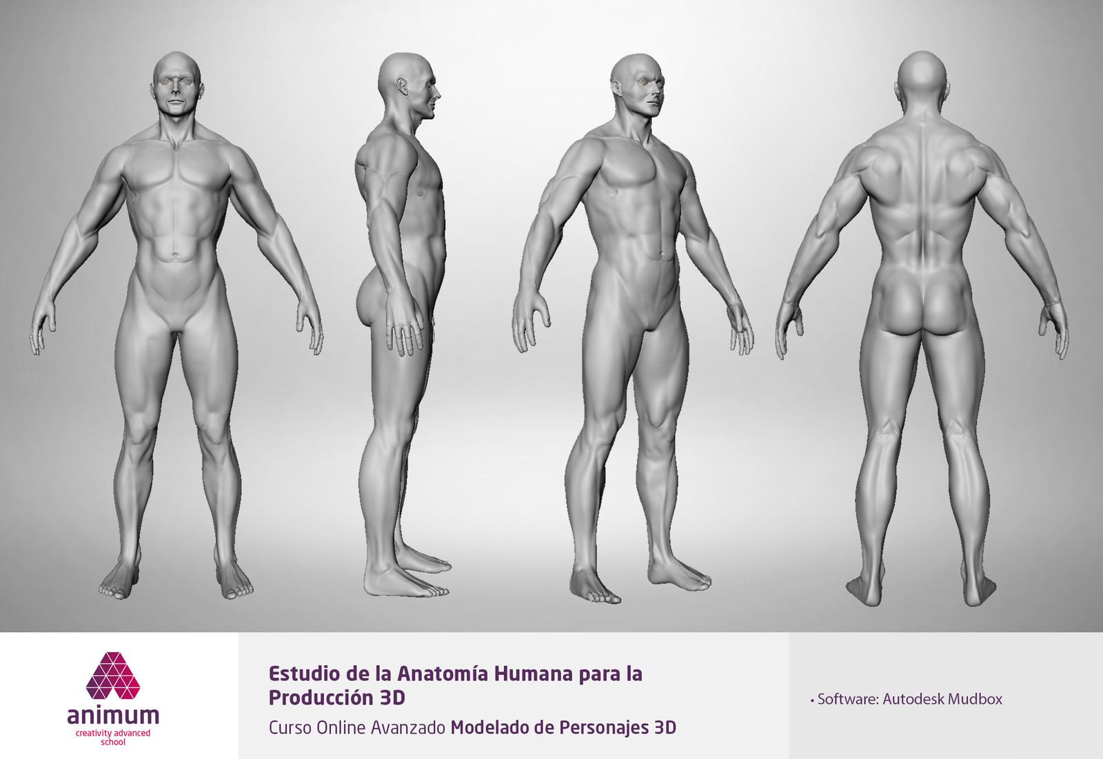 ArtStation - Estudio de la anatomía humana y expresiones, cynthia ...