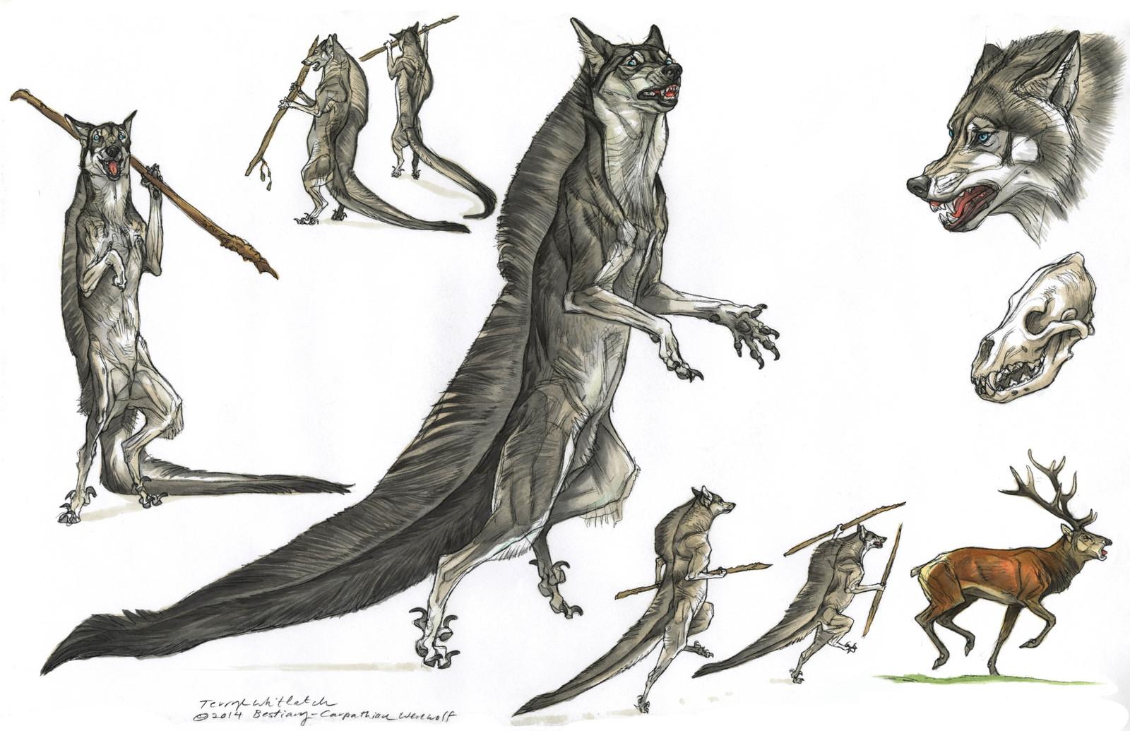 Carpathian werewolf