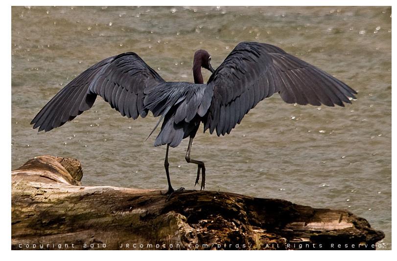 Alex jay brady 1 heron wings example