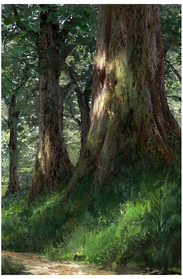 Quentin mabille arbre foret 2