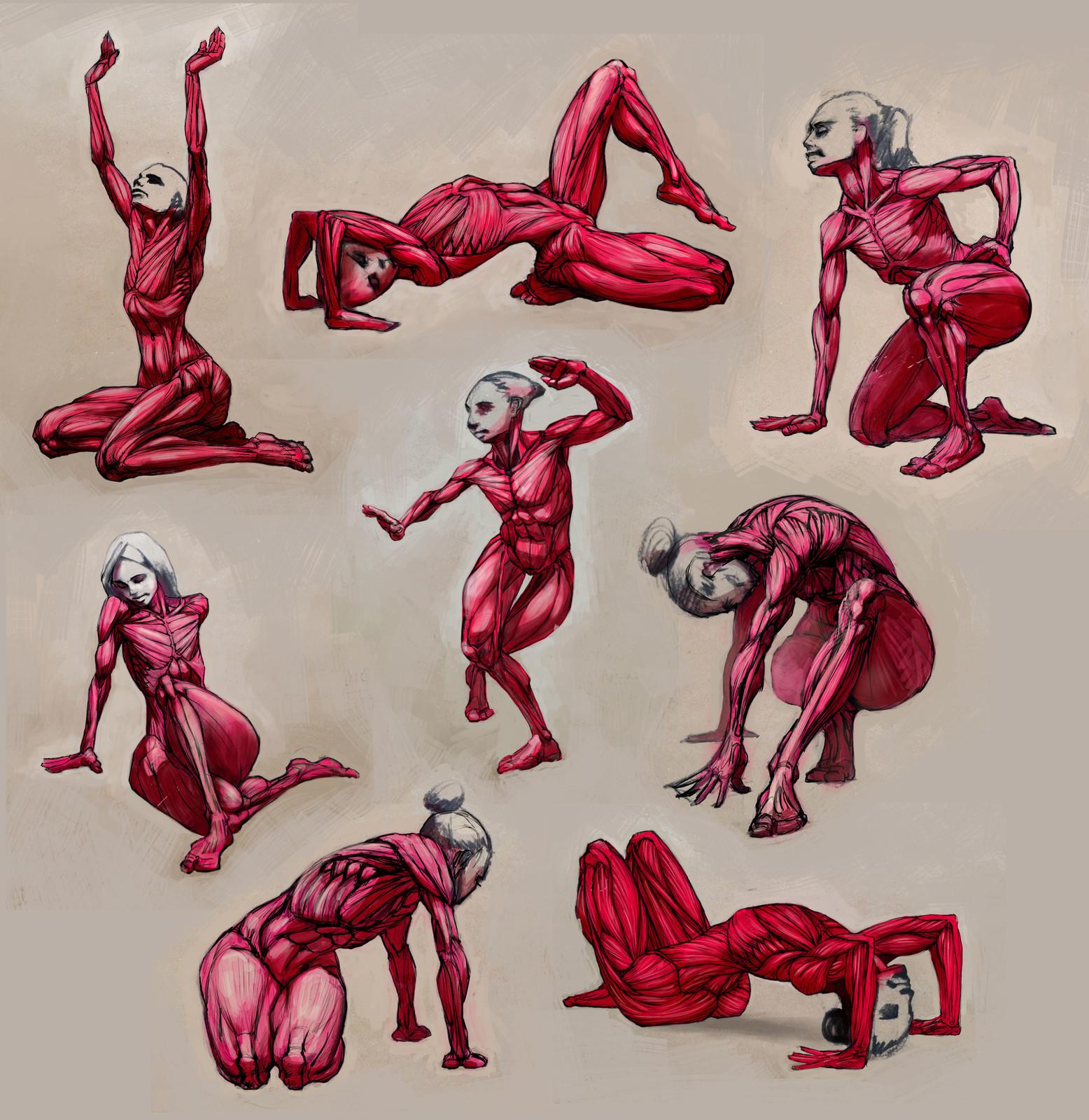 Anatomical studies.