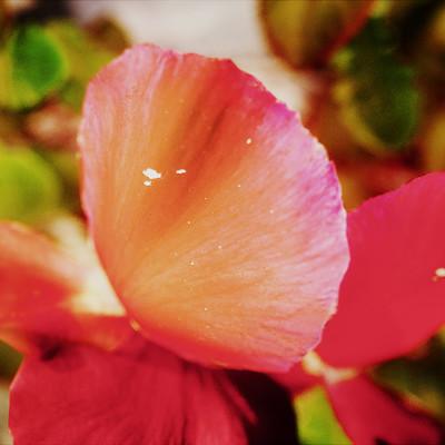 Morteza ahmadi flower2