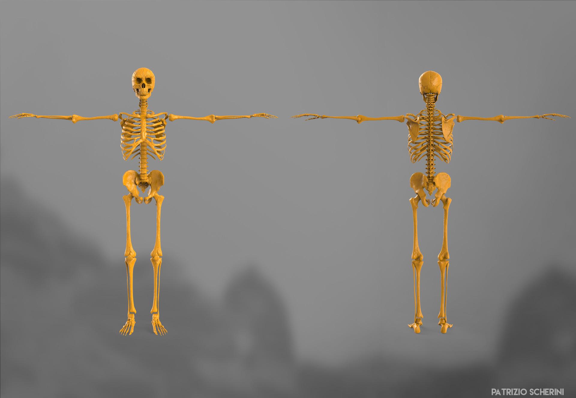Patrizio scherini skeletro 07 frontback