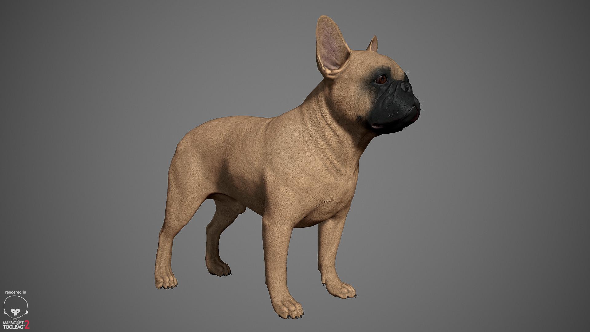 Alex lashko frenchbulldog by alexlashko marmoset 02