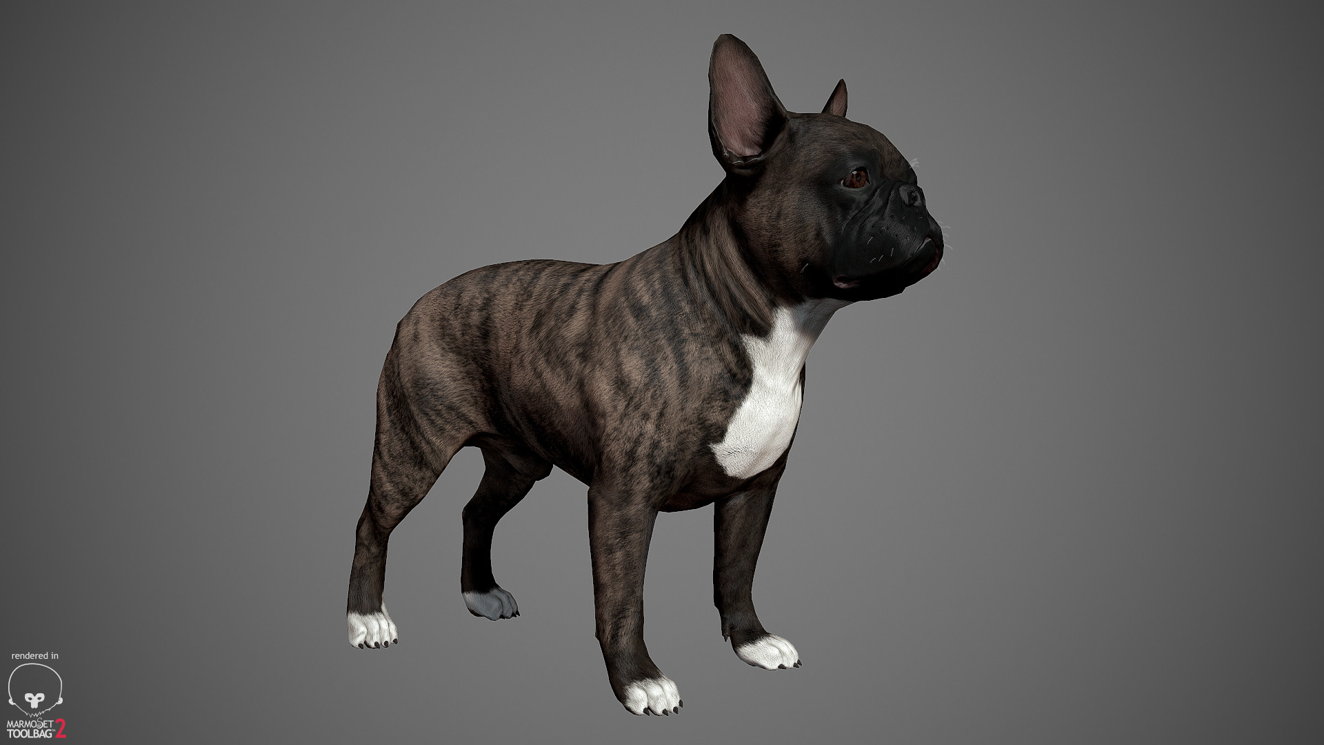 Alex lashko frenchbulldog by alexlashko marmoset 04