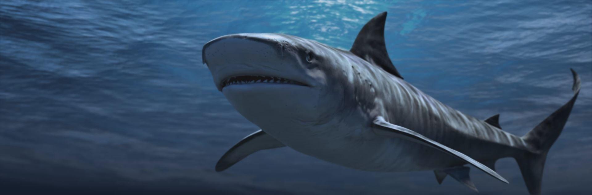 Martin krol shark 01