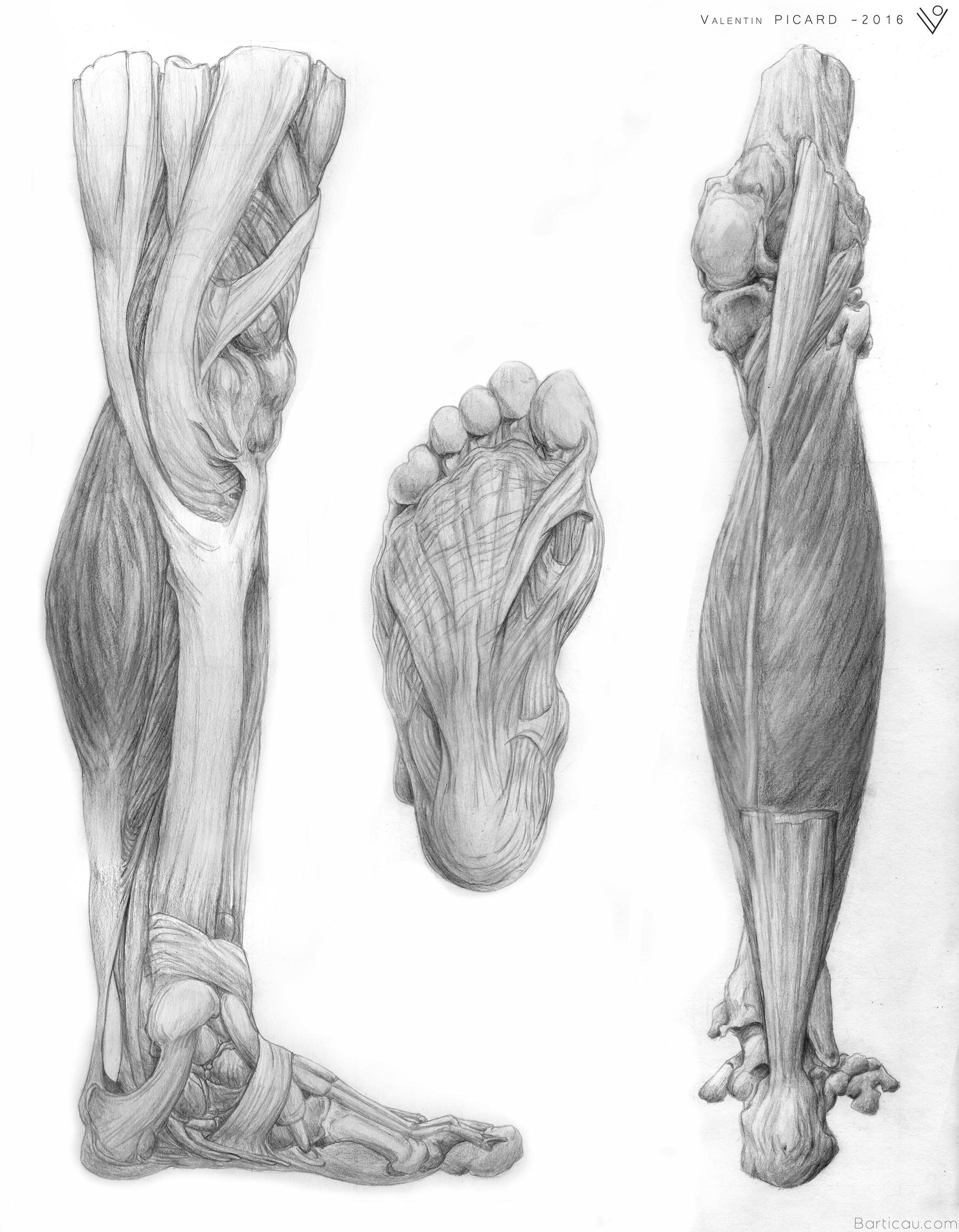 Valentin PICARD - Academic drawing No.2 - Legs anatomy