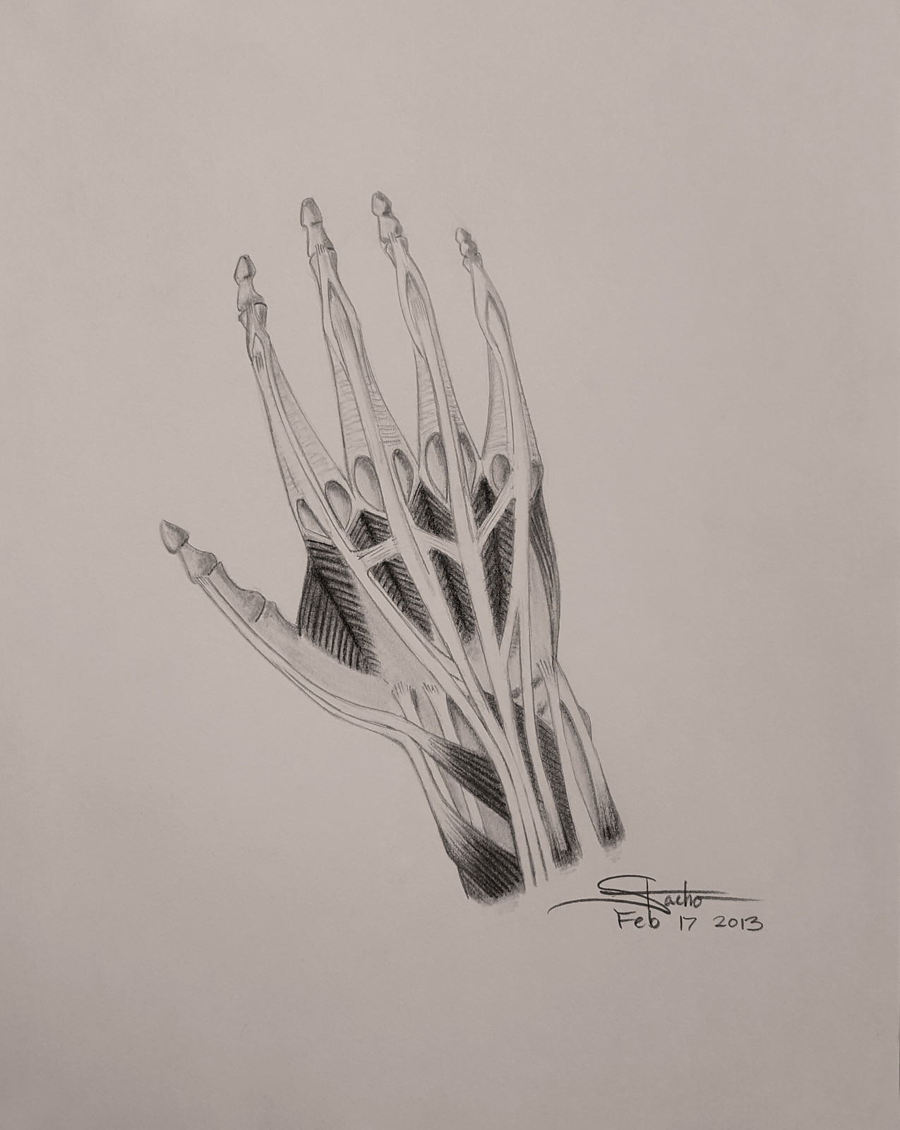 Structure of the Hand