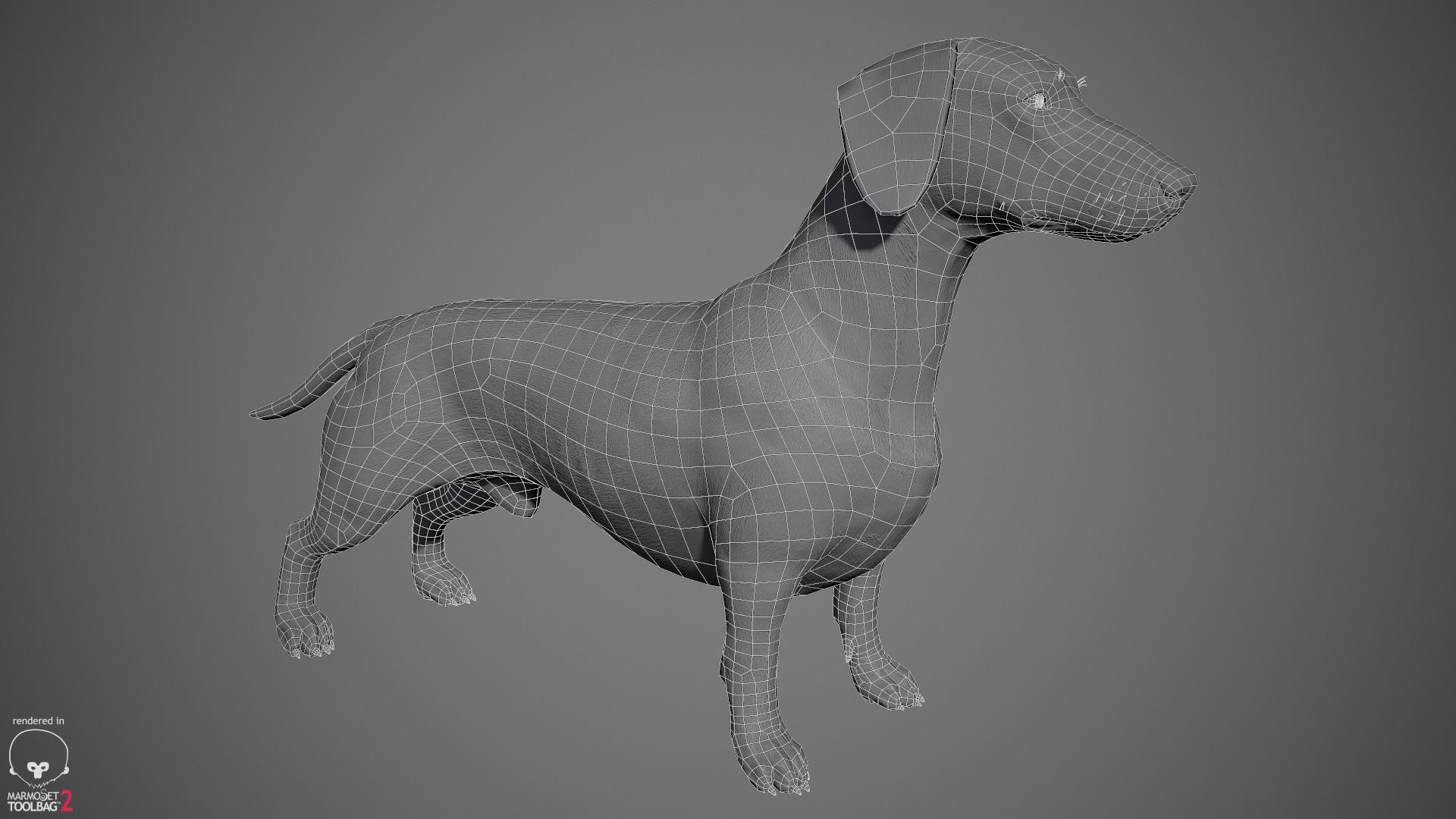 Alex lashko dachshund by alexlashko wireframe 01