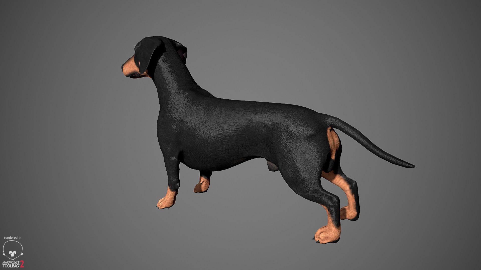 Alex lashko dachshund by alexlashko marmoset 06