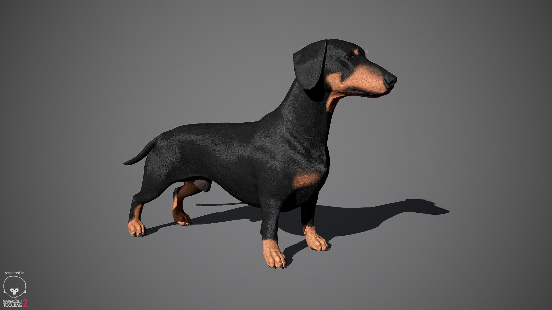 Alex lashko dachshund by alexlashko marmoset 11