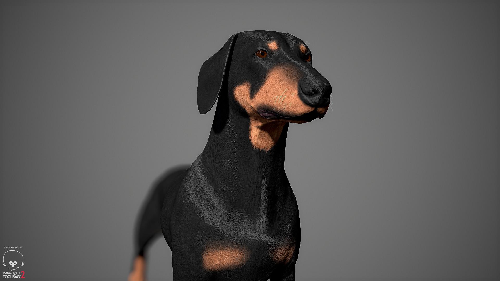Alex lashko dachshund by alexlashko marmoset 15