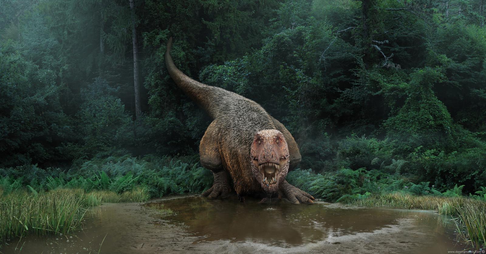 Tyrannosaurus rehydrating