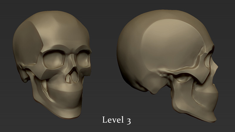 Skull study developed during my old online class.