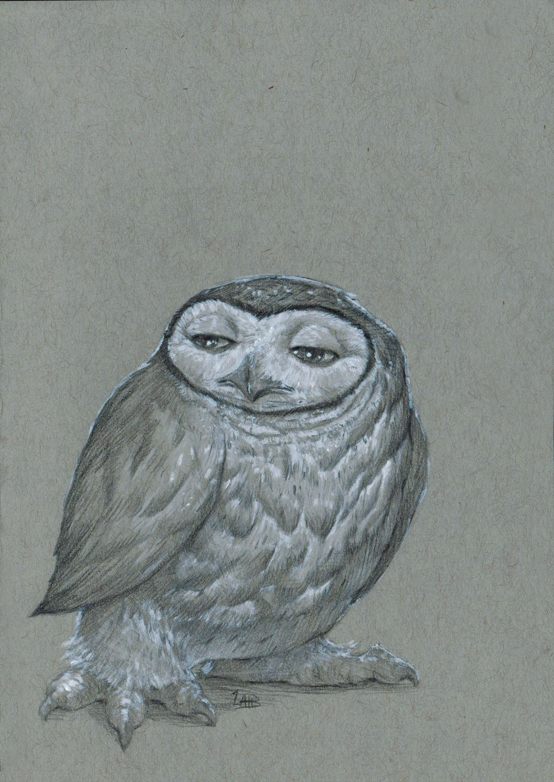 An Indifferent Owl