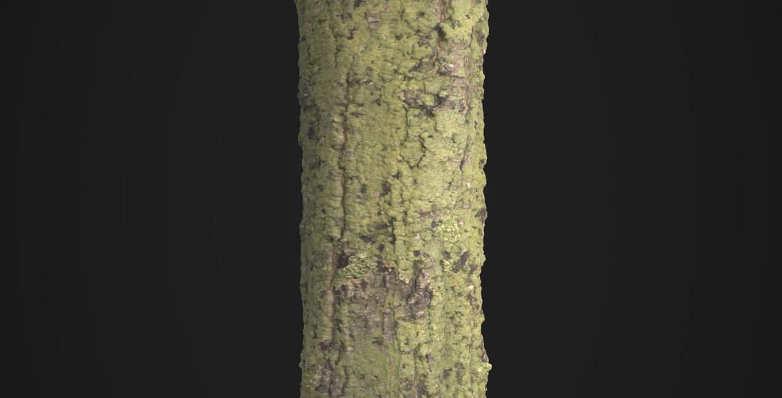 Martin pietras bark moss orig