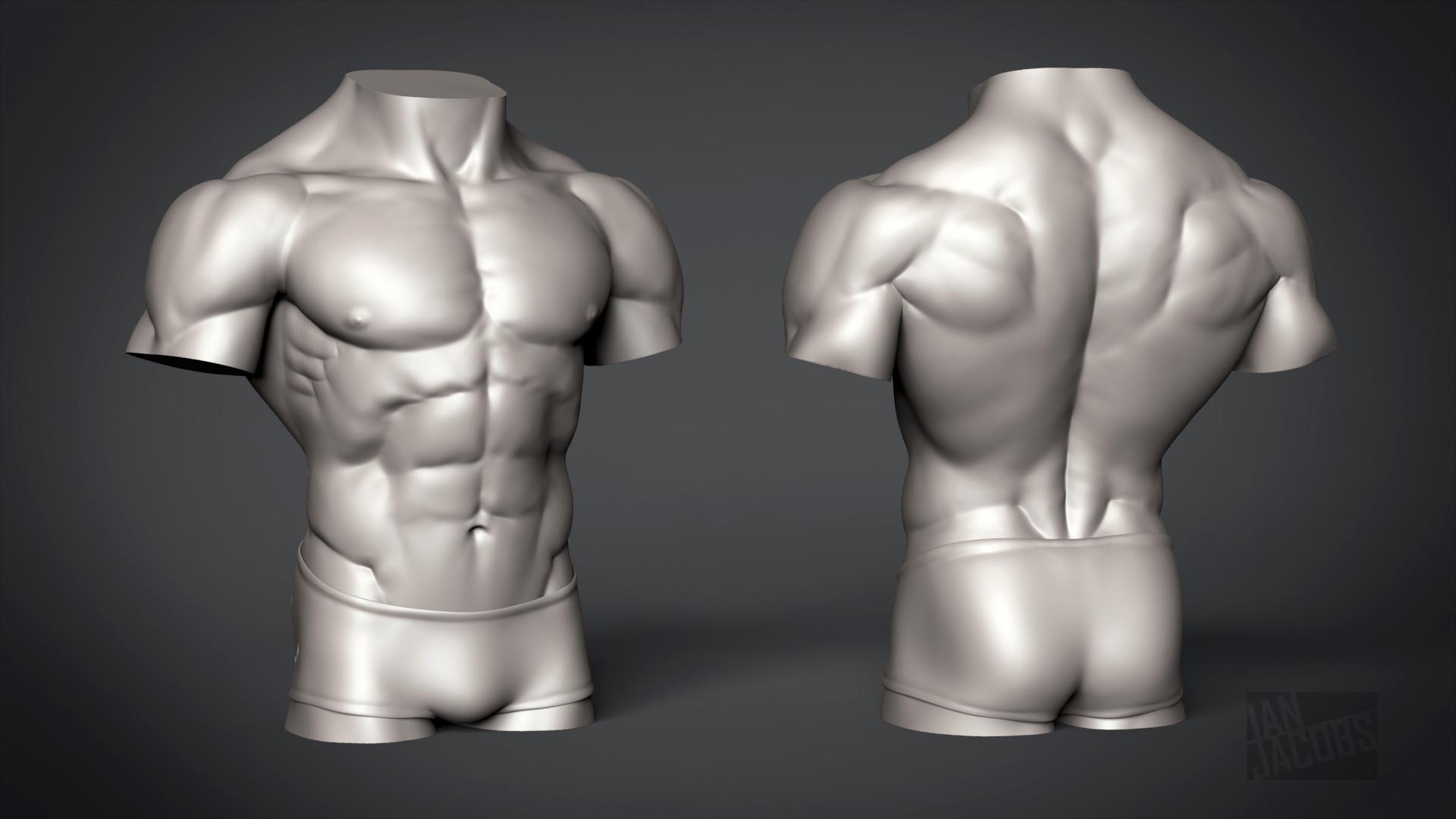 ArtStation - Male Torso - Anatomy Study, Ian Jacobs