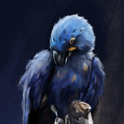 Melissa goodman parrotpaintingversionflattenedeeek3