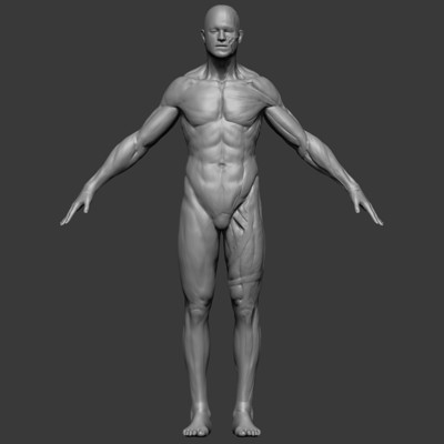 Filip nica anatomy front