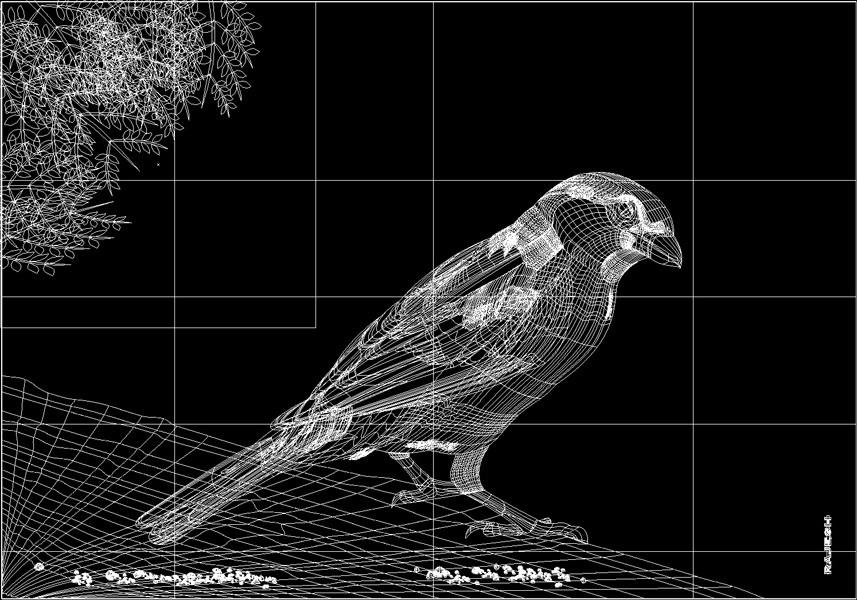 Rajesh sawant sparrow wire frame