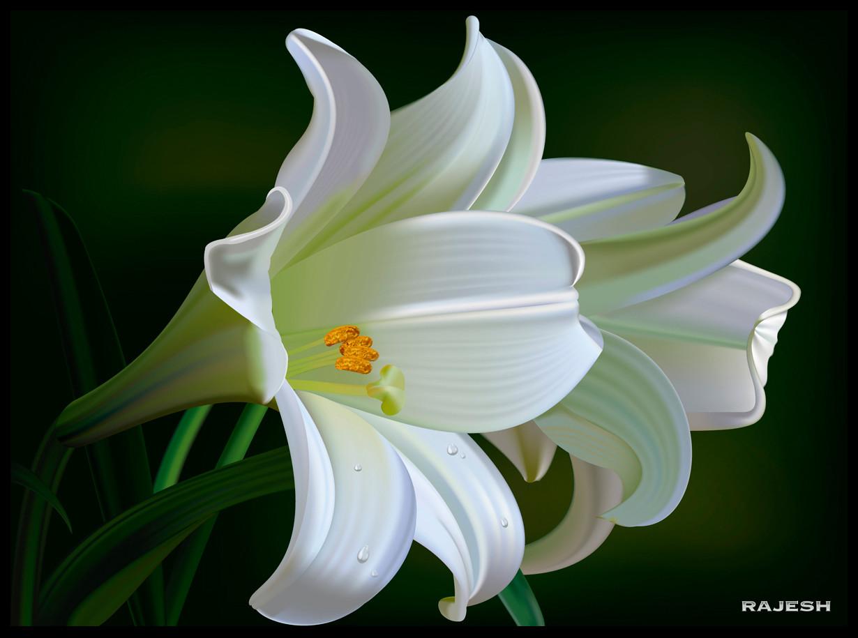 Rajesh sawant lilies