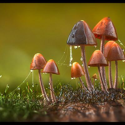 Prasanth chundakkattil mushroom topost