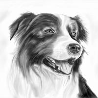 Artstation Siberian Husky Sketch W Pearce