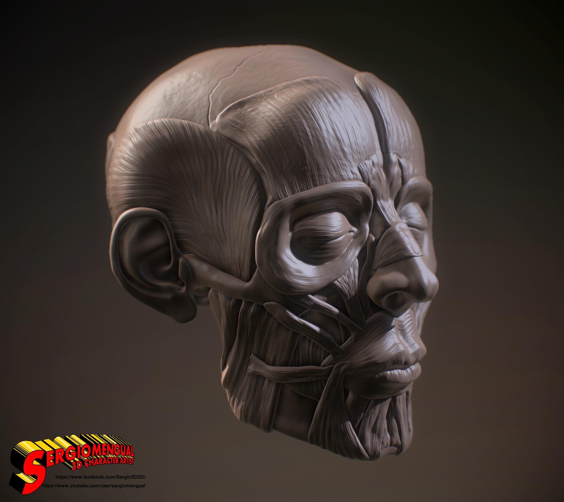 Sergio gabriel mengual sergio gabriel mengual skull ecorche view5