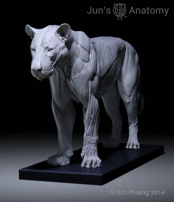 ArtStation - Lion anatomy model, Jun Huang