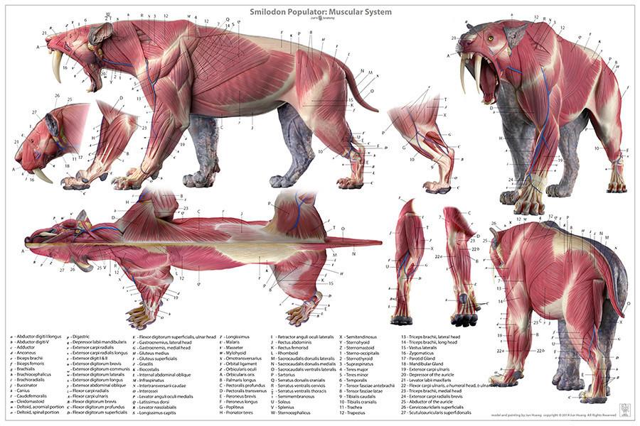 Groß Tieranatomie Spiele Bilder - Anatomie Ideen - finotti.info