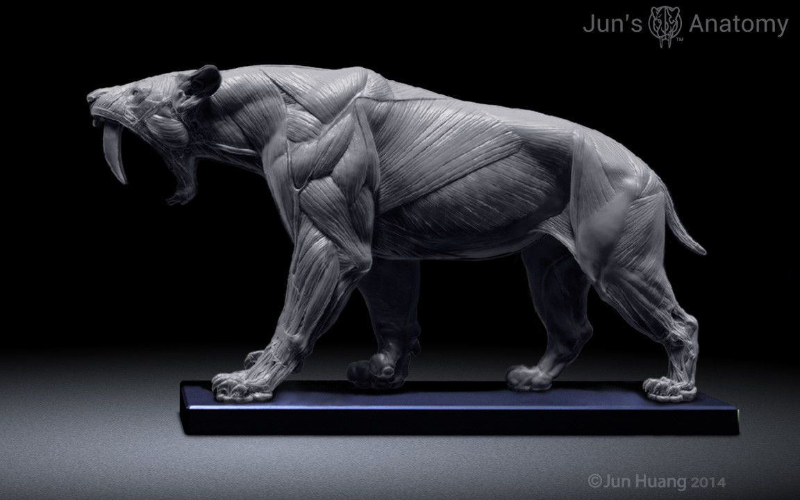 ArtStation - Smilodon anatomy model, Jun Huang